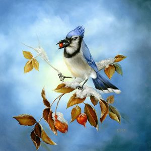 Blue Jay - Winter Out My Winter by Cheri Rol