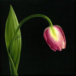 Beginning Oil Tulip by Cheri Rol