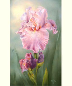 April Iris - Pond Lily by Cheri Rol